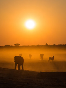 Elephants and a Zebra at sunset