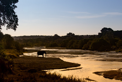 Elephant along the Sand River