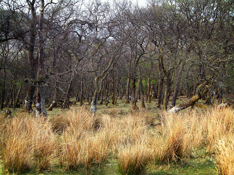 the grasslands ouotside Kilchurn Castle, Scotland.