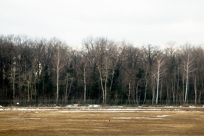 Russian berioska (birch) tree-line beside Domodedovo Aeroport.   (See, e.g.: http://www.uh.edu/engines/epi3068.htm )