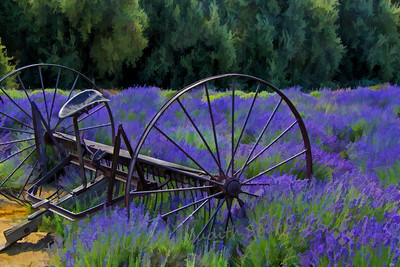 The Old Hay Rake