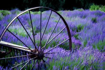 The Wheel and the Lavender