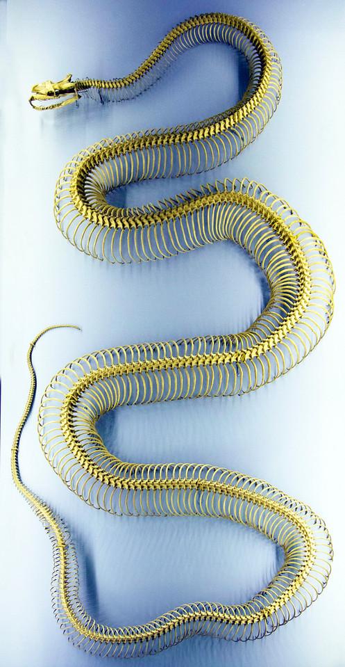 Boa constrictor skeleton