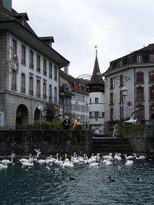 In Thun - old ducks feeding old ducks
