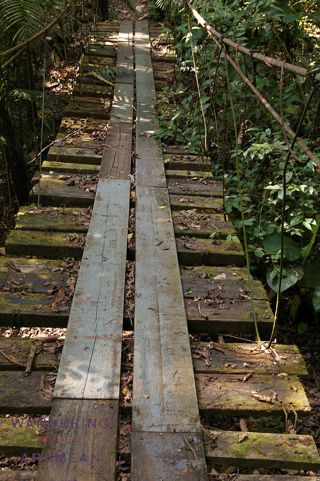 "One of a few ""death bridges"" in the forest; this one was still in use."