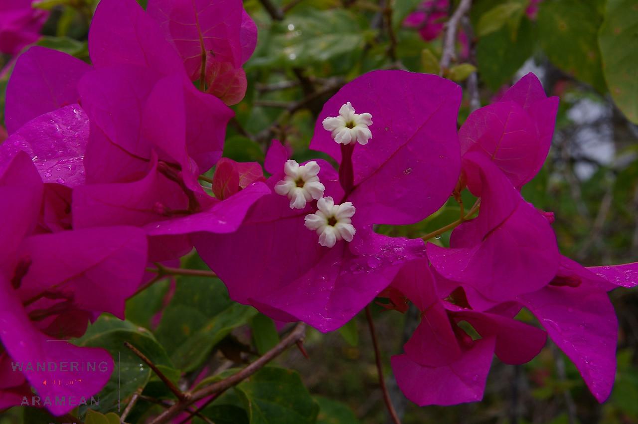 Flowers of the Gamboa resort
