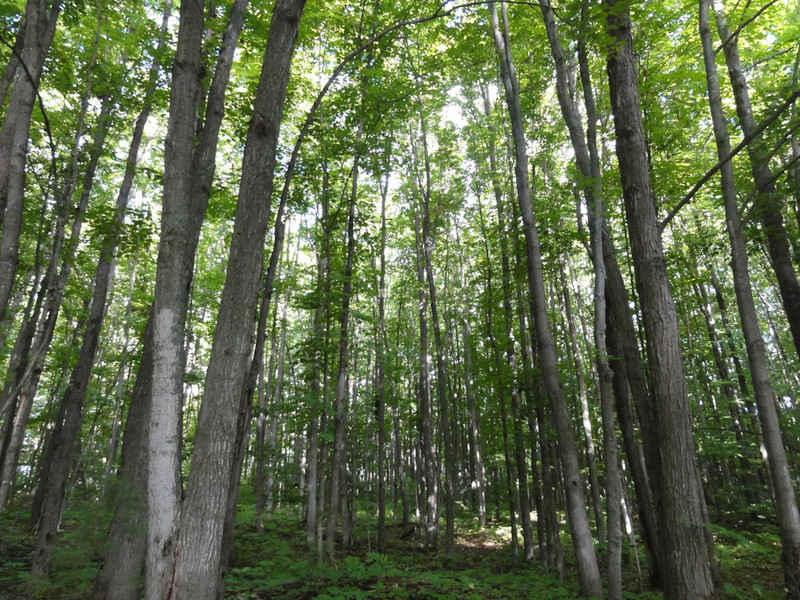 Woods on the north west to west side of the lake