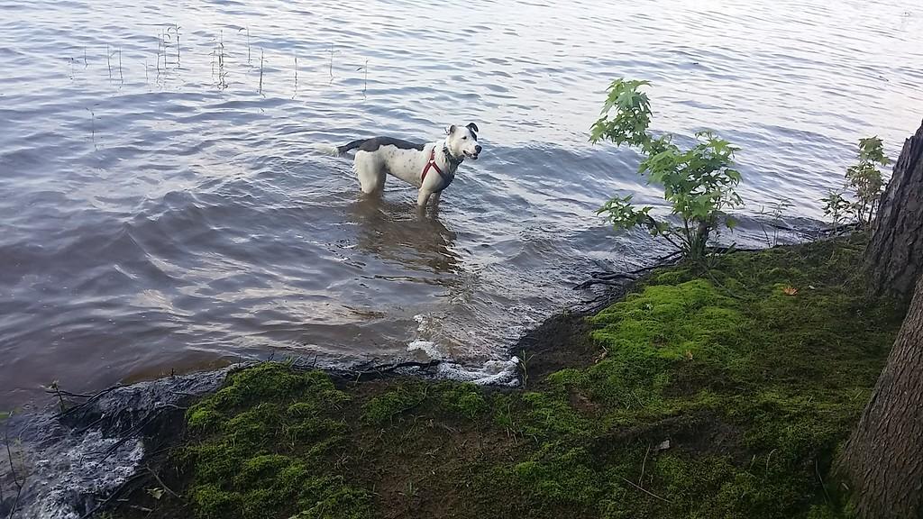 Sydney enjoying the water