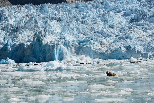 The Le Conte Glacier calves a small amount of ice.