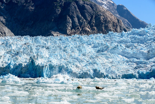 Cruising in the ice from the Le Conte Glacier near Petersburg, AK.