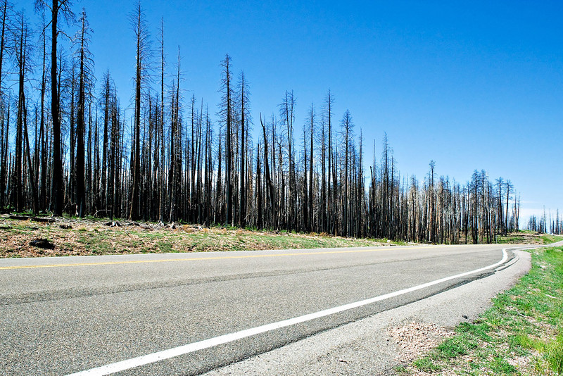 ROAD VIEW THROUGH THE BURNED FOREST.