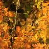 ARIZONA  Autumn colors