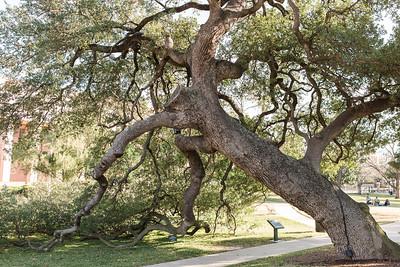 13 Live Oak