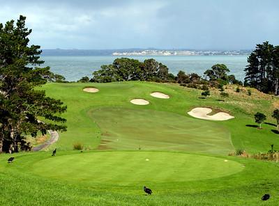 Auckland, Gulf Harbor #14