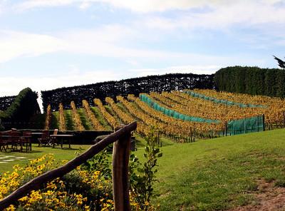 auckland, waiheke's mudbrick vineyard2