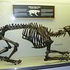 Smilodons