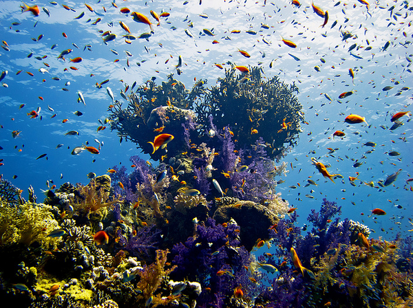 Sharm el Sheikh Diver's Paradise