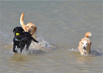 Dog Friendly holidays in North Cornwall