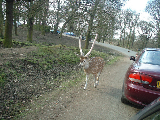 Knowsley Safari Park