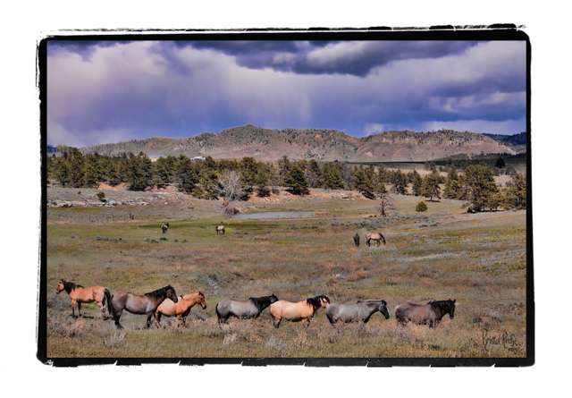 Road Trips Wild Mustang Sanctuary