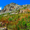Table Mountain South Africa Bike Trails