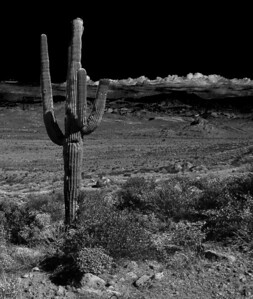 _9309711_lzn cactus on Mars