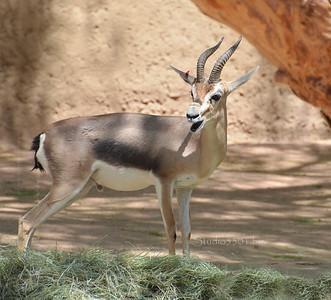 Gizelle Phx Zoo 0512 8020