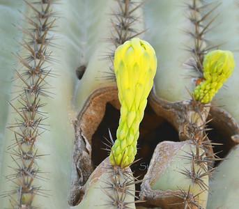 cactus8066