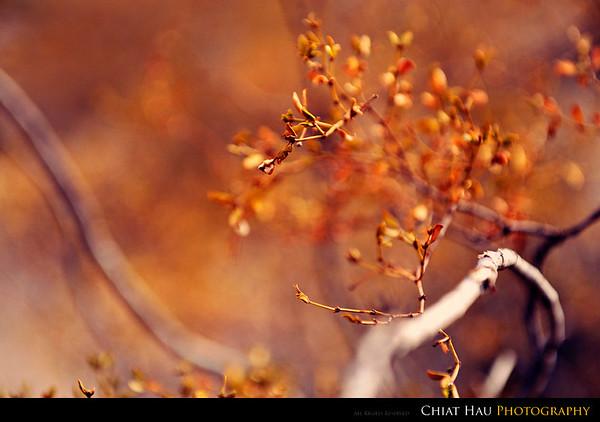 A dried petal
