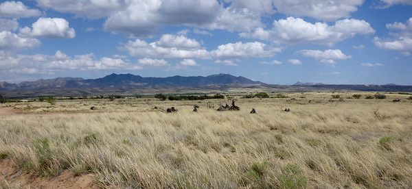 The grasslands just north of Sonoita have an African vibe.