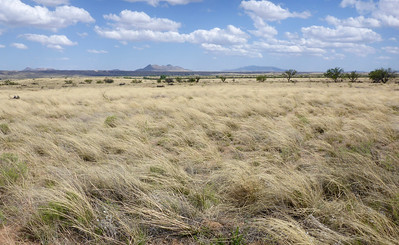 Another view north of Sonoita, from inside Las Cienegas National Conservation Area.
