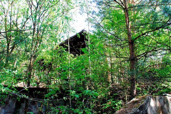 In the woods,but it wasnt always like this