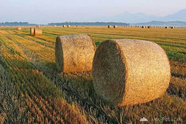 In August fields are full of bales.