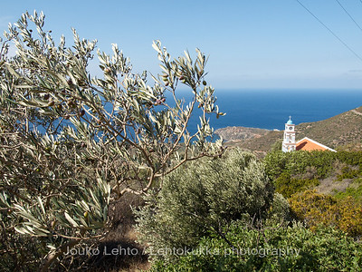 Olives and a church #1