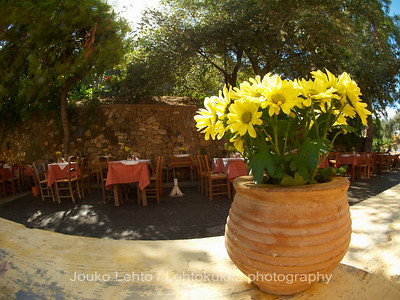 Yellow ChrysanthemumWaiting For You