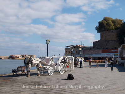 Carriages, Tourists, and a Dog