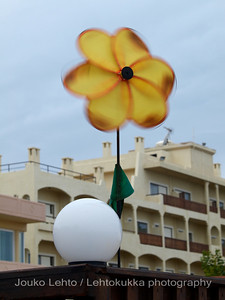 Flower of Wind