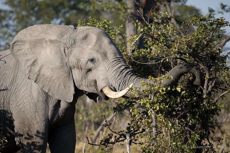 Elephant-9424