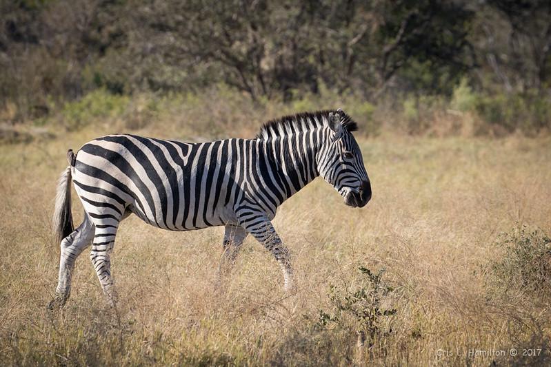 Zebra-1208