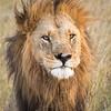 Lion old-0721-