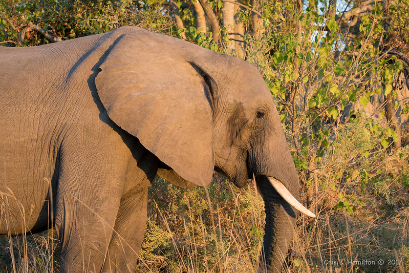 Elephant-4089
