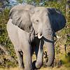 Elephant-9507