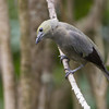 Tanager-Palm-5026