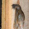Snail-2459