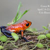 Strawberry Bluejeans Frog