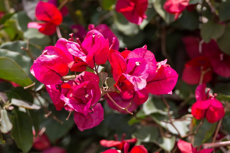 Flower-4985