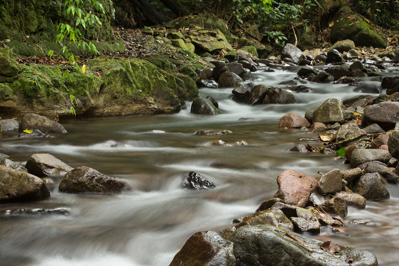 Bosque-de-Paz-Water-0075