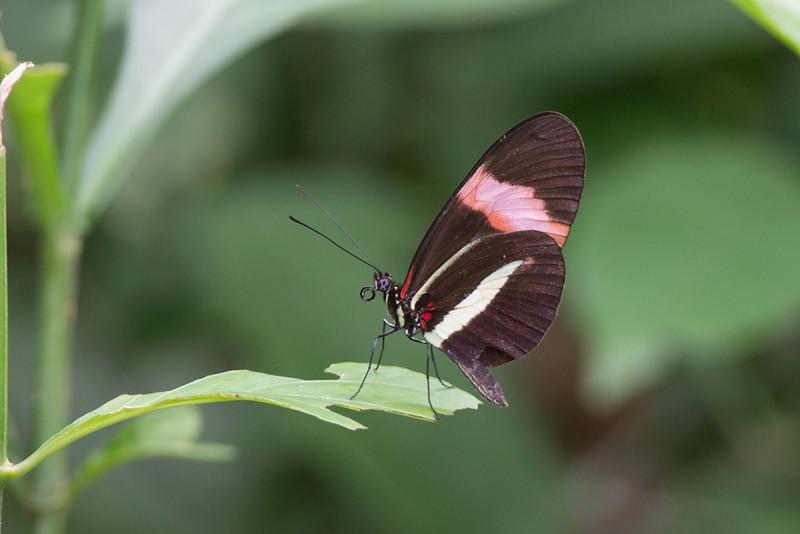 Butterfly-1739