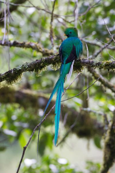 Quetzal-1840