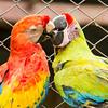 Macaws-9997